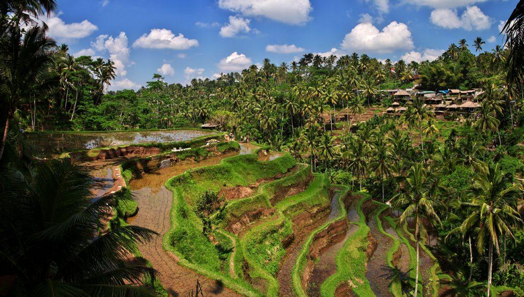 Đường đi đến cổng trời Bali có nhnieuef cảnh đẹp với đồng lúa hai bên