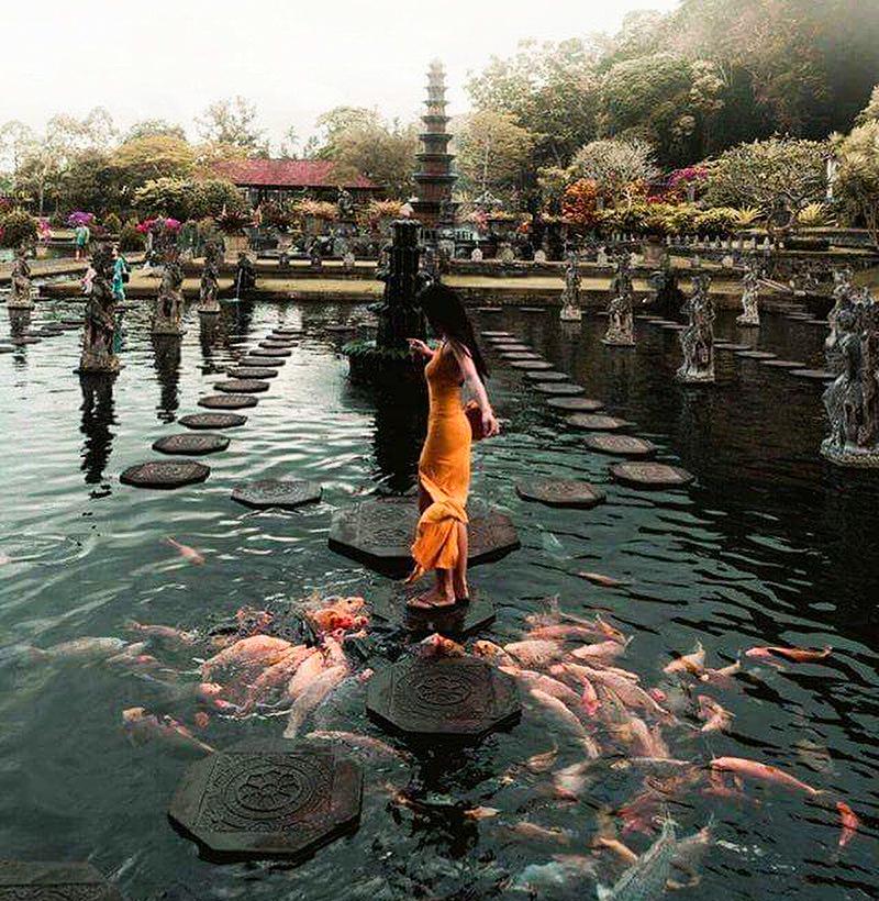 Khách tham quan nô đùa cùng đàn cá tại đền Taman Ayun