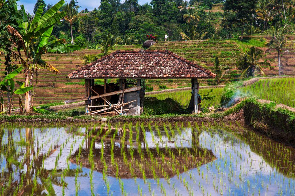 Khung cảnh bình yên ở đồng quê Bali