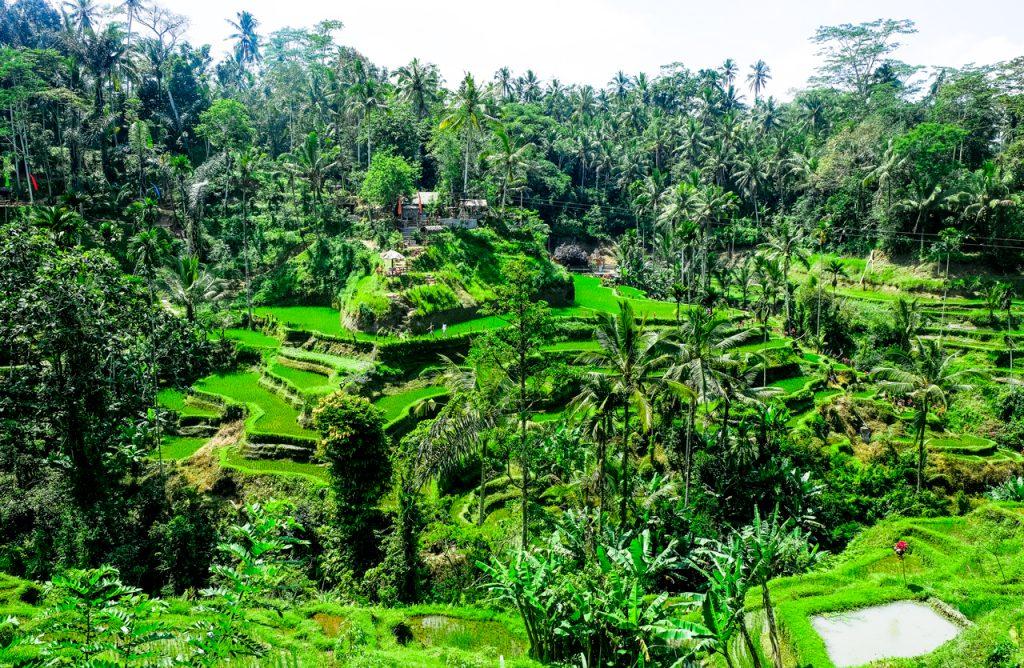 Ruộng bậc thang Tegallalang Bali